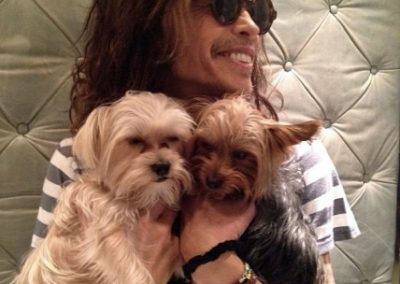 Steven Tyler with a morkie and yorkie