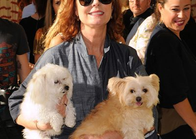 Susan Sarandon and maltese and morkie