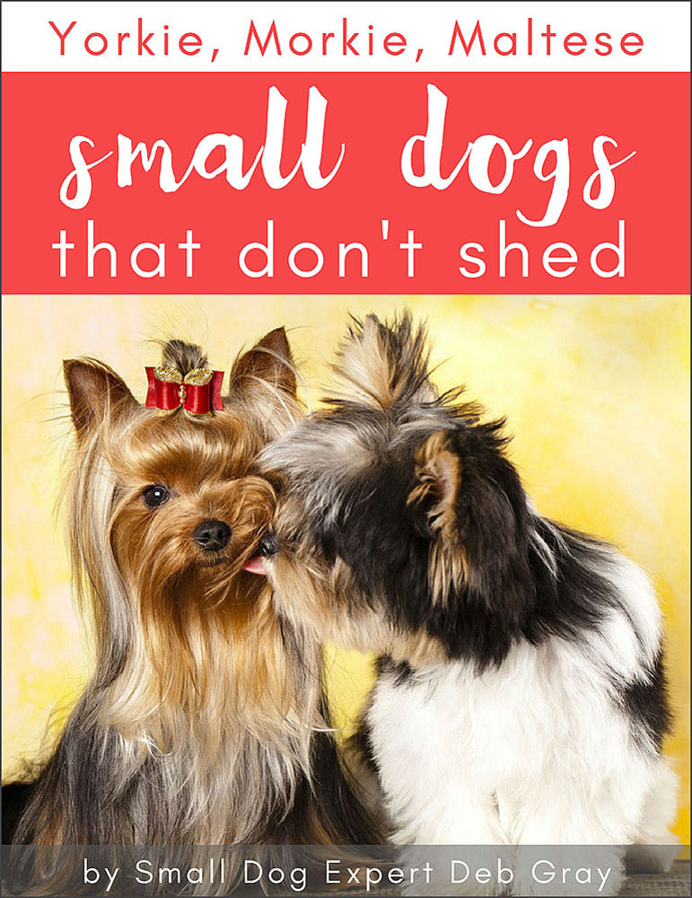 Yorkie Morkie Maltese Small Dogs that Dont Shed