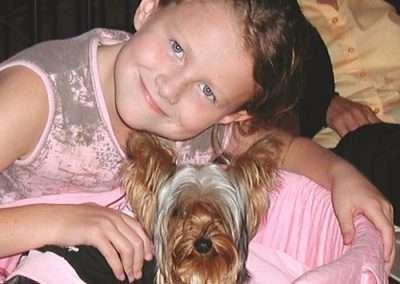 Yorkie Yorkshire Terrier 15