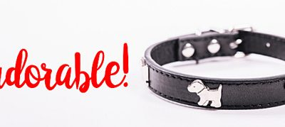 Designer dog collars for your Morkie