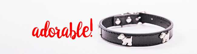 Designer dog collars for your Morkie