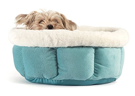 dog cozy in bed safe and sound