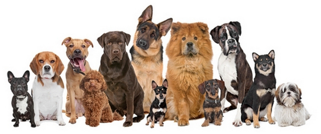 Find dogs at pet adoption websites