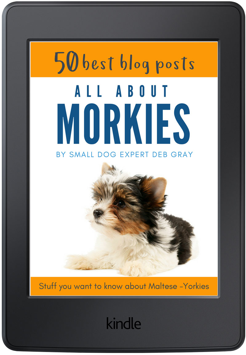 Maltese mix information book, all about Morkies