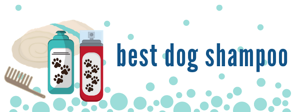 best dog shampoo for your Morkie