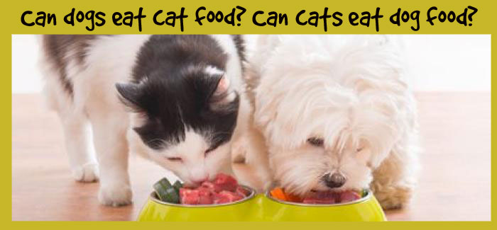 can cats eat dog food and can dogs eat cat food