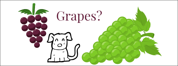 can dogs have grapes