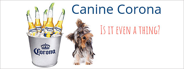 Corona Vaccine for your Morkie?