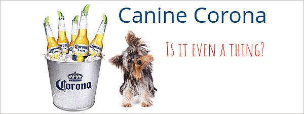 Caninecorona isitseriousandshouldwegetthevaccination