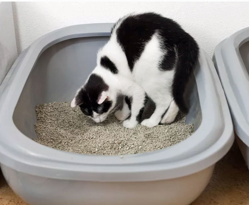 cleaning the cat litter box