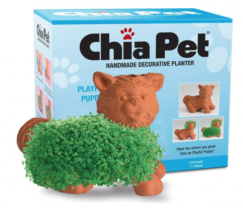 Popular Chia Pet, playful puppy
