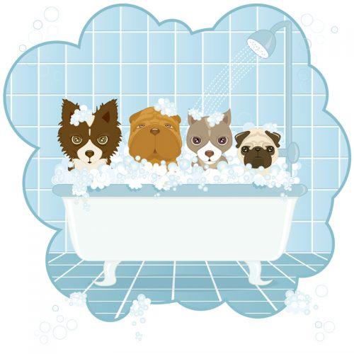 bathing Morkies