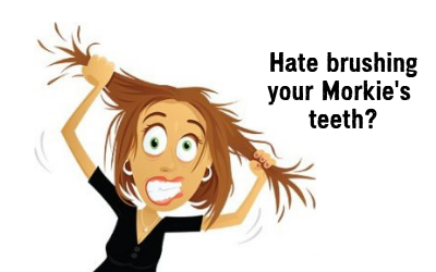 Hate brushing your Morkie's teeth? Try this.
