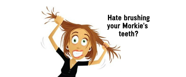 do you hate brushing your morkie's teeth