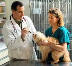 A vet and tech support person, demonstrating good Veterinary care