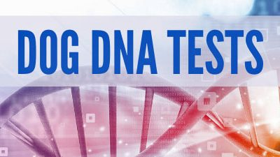 Dog DNA Tests – right for your Morkie?