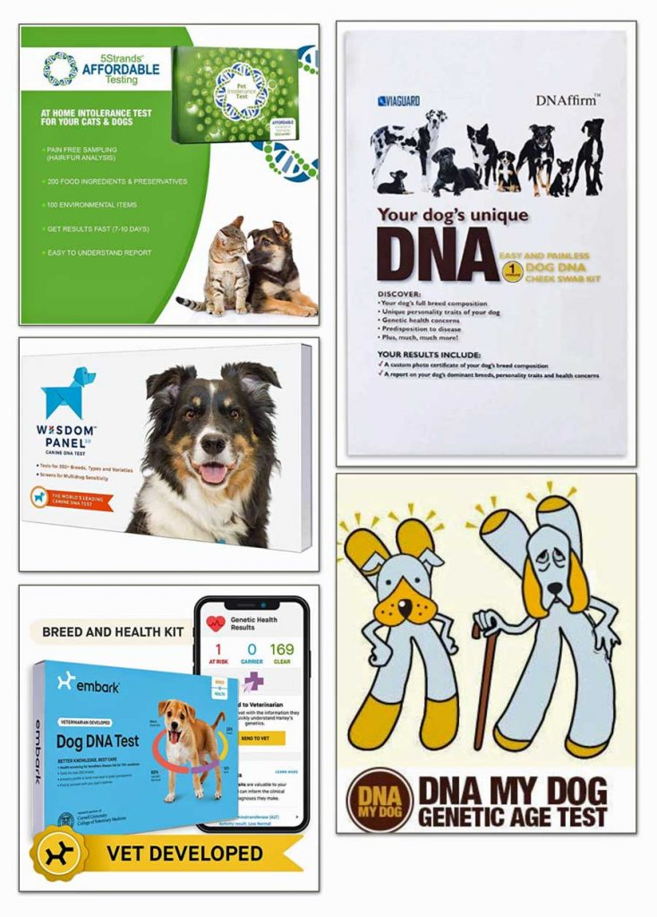 dog dna tests for sale
