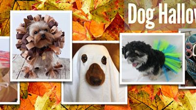 Dog Halloween Costumes for your Morkie
