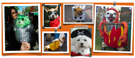 collage of dog Halloween costumes