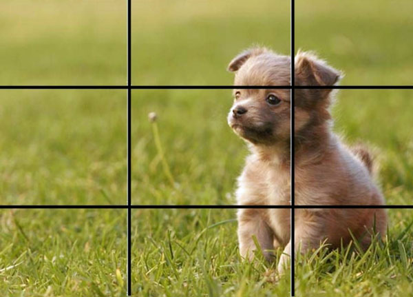 dog photo and the rule of thirds