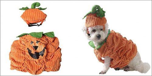 dog pumpkin costume details
