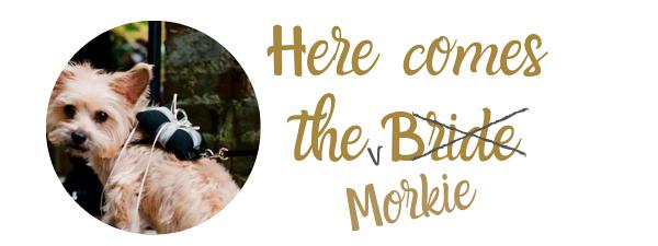 Dog ring bearer – dogs in weddings