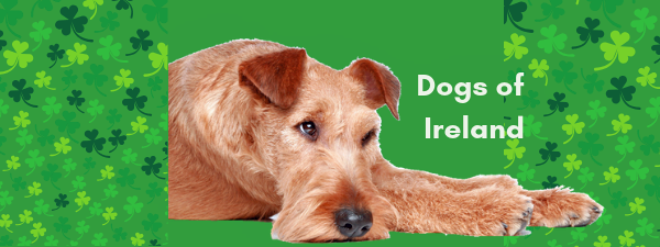 Why the Irish love their dogs!
