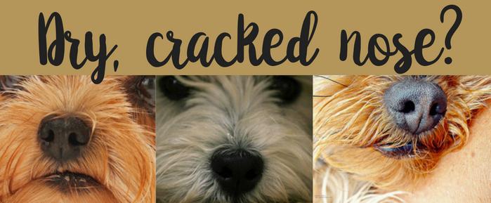 dry cracked dog nose