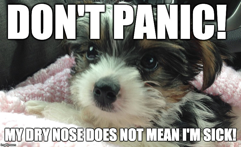 should a dogs nose be dry or wet?