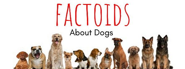 Dog Facts: Cool Things About Our Canine Friends