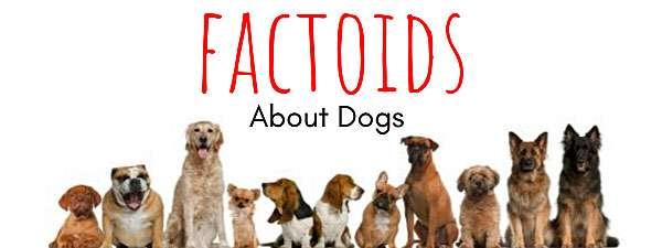 dog facts