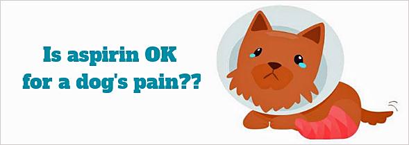 is aspirin ok for dogs