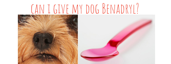 benadryl for dogs