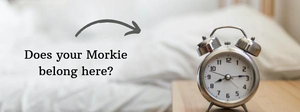 Should my dog sleep in my bed?