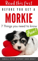 free morkie report