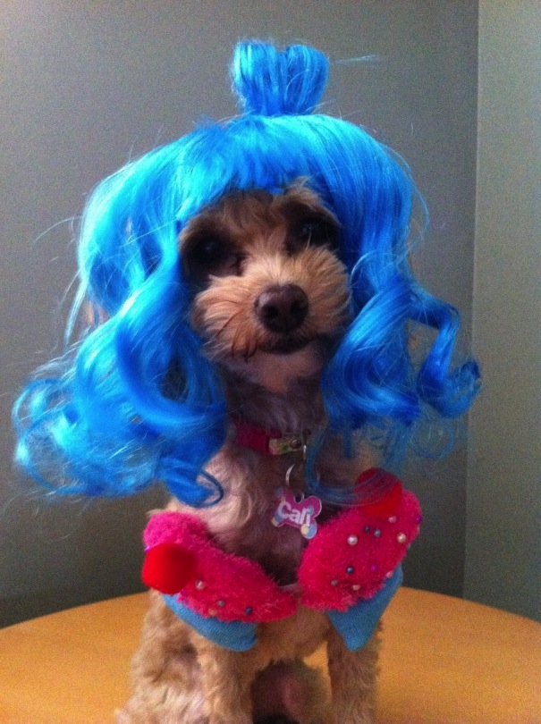 wigging out at halloween, funny dog costumes