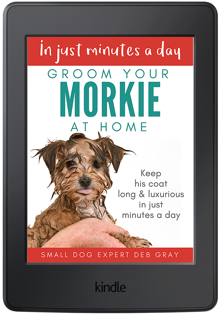 Morky dog grooming at home
