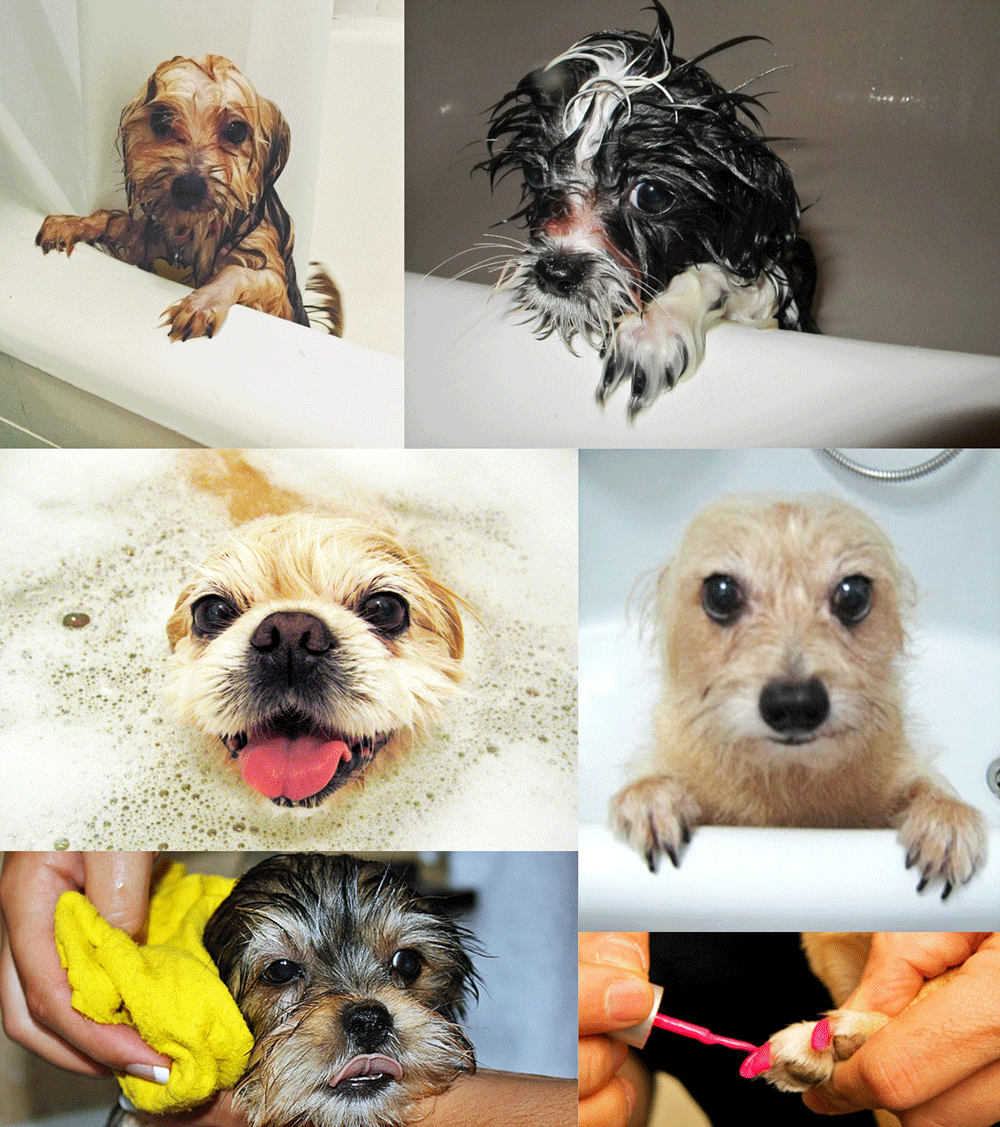 Home Dog Grooming For Your Morkie