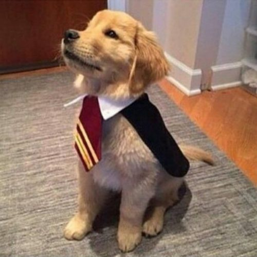 another harry potter costume