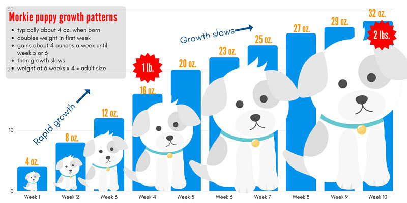 puppy growth chart