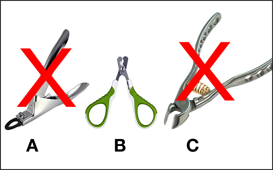 how to cut dogs nails the tools