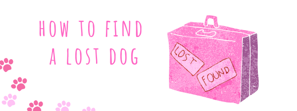 Finding your Lost Morkie