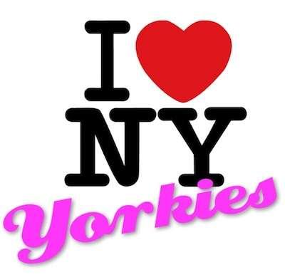 i love new yorkies