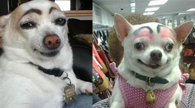 dogs with funny eyebrows