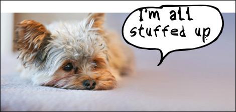 Dog saying I'm all stuffed up