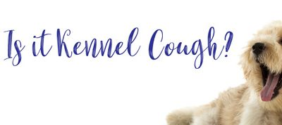 What is Kennel Cough?