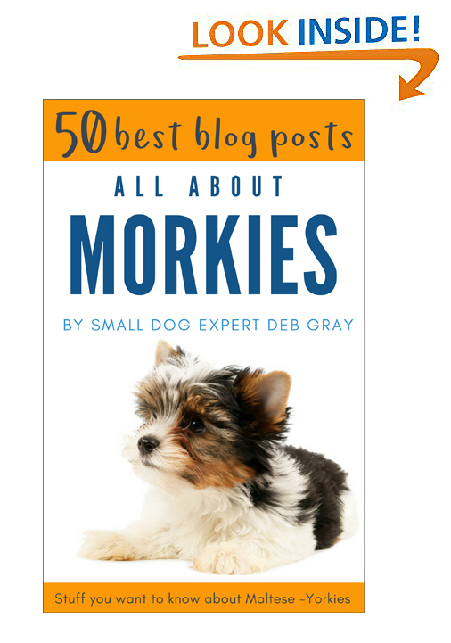 Morkie information ebook