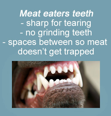 dogs have meat eaters teeth