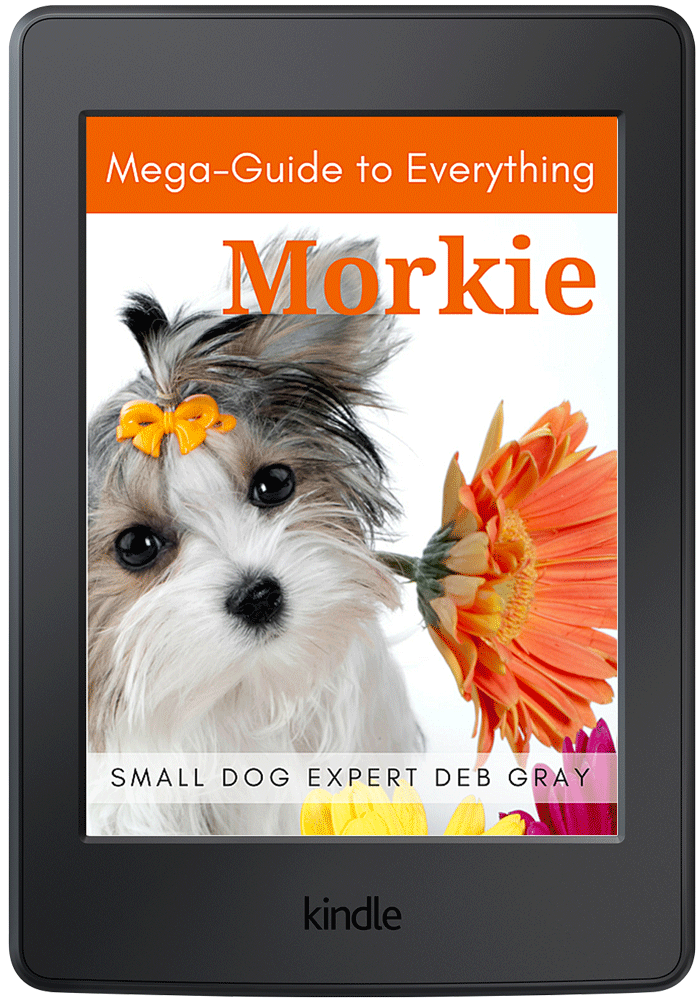 morkie mega-guide dog care